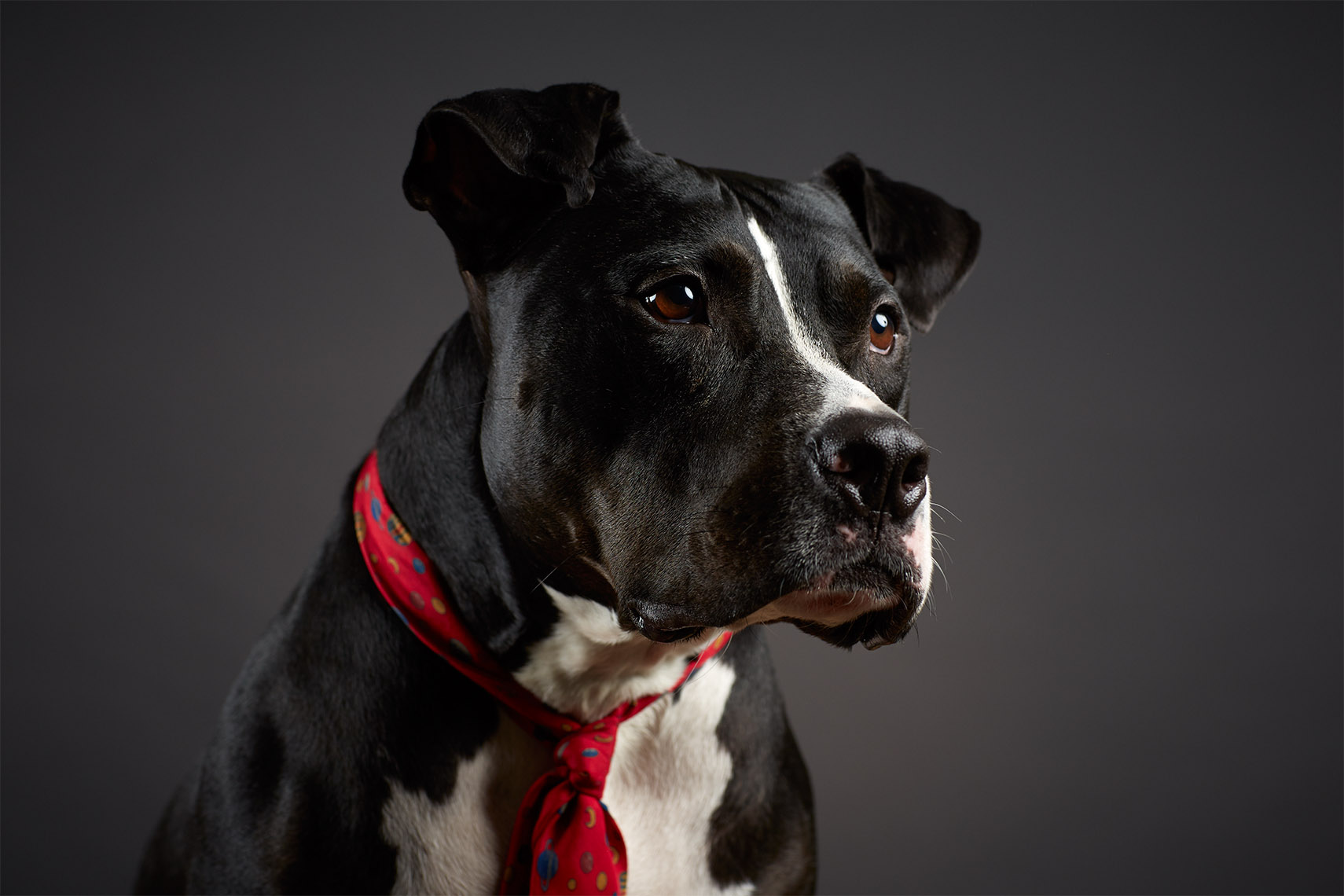 Pet Photography Professionals, Austin - Studio Stence